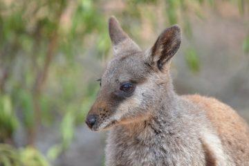 mejores cosas que hacer y ver en Alice Springs