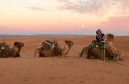 Lo que debes saber antes de visitar Marrakech