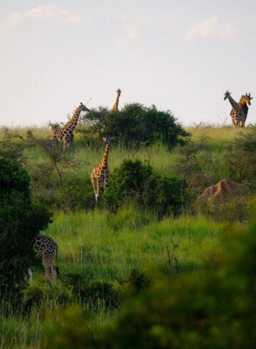 cómo viajar a África virtualmente
